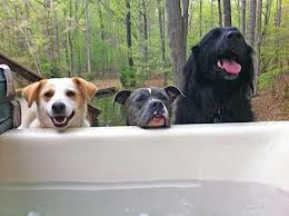 3-Dogs-in-a-Hot-Tub